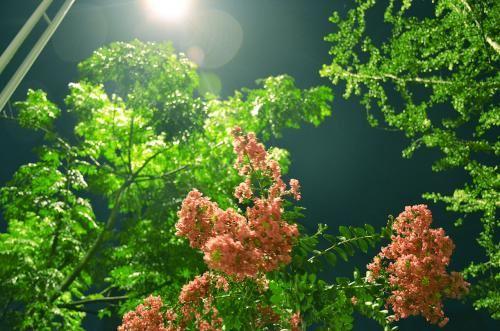 睡前故事《漫步植物世界》MP3打包下载 11集
