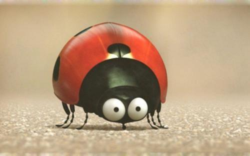 微观小世界 微观世界 昆虫总动员 迅雷下载