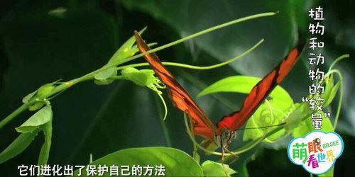 萌眼看世界之了不起的动植物(标清打包)百度网盘