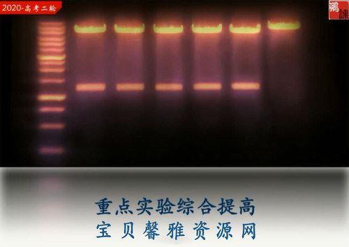 2020猿辅导张鹏生物寒假班(完结)(高清视频)百度网盘