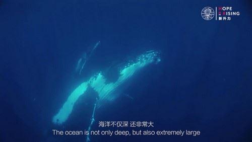新升力海洋课(完结)(高清视频)百度网盘